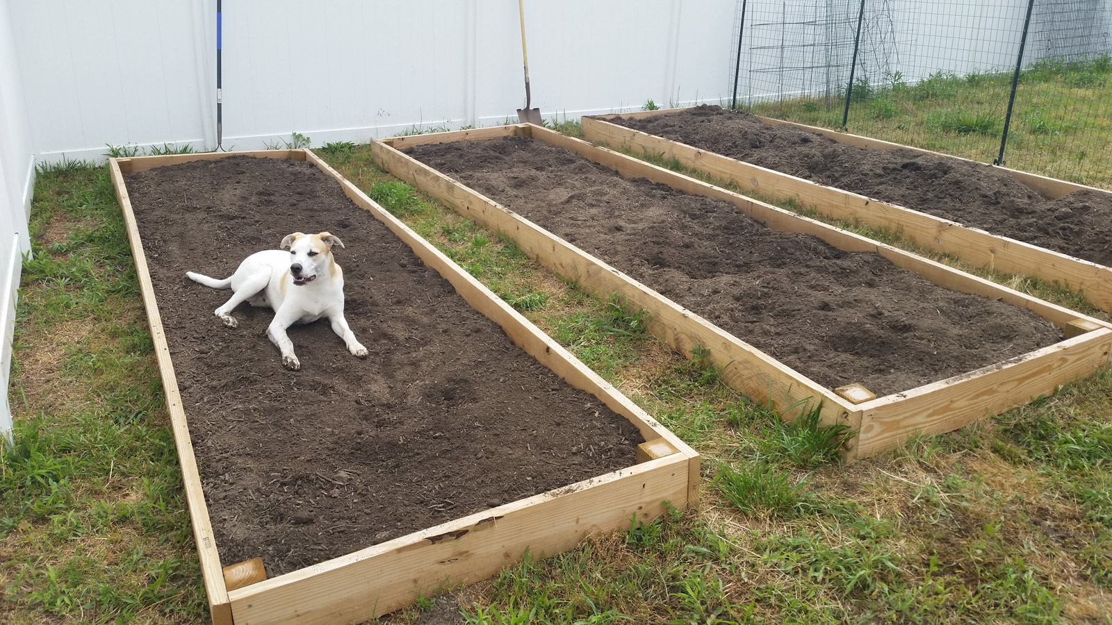 May 4th Update: Transplants In, More on the Way